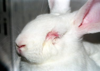 Hundreds of Scientists Learn How to Spare Animals Suffering in Painful Tests