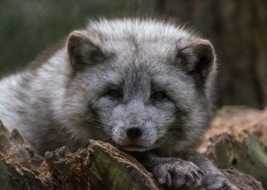 Gucci Is Finally Banning Fur