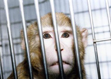 PETA Has 'New Deal' for Boris Johnson