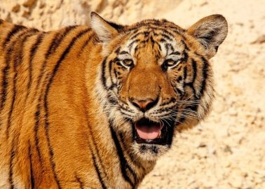 Victory: MSPs Bring Scotland One Step Closer to Wild-Animal Circus Ban