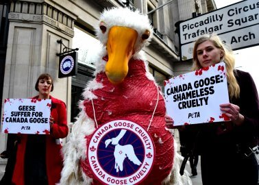 Canada Goose Fails to Silence Animal Rights Activists at High Court