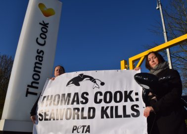 Week of Action! Campaign for Thomas Cook to Drop SeaWorld Goes International