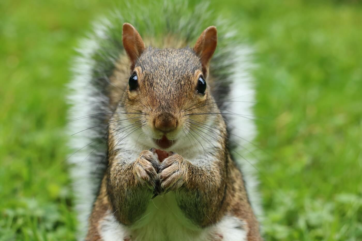 culling grey squirrels is unjustifiable both scientifically and