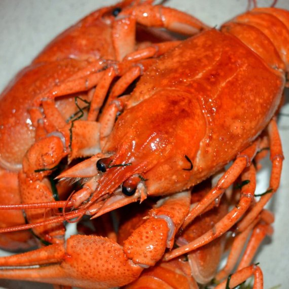 Tell Amazon.co.uk to Stop Selling Lobsters and Other Live Animals