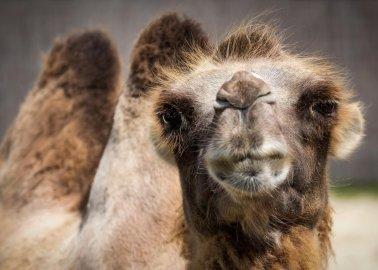 Progress! Wales Announces Plans to Ban Wild-Animal Circuses