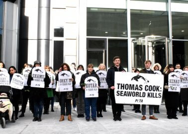 Victory! Travel Giant Thomas Cook Cuts Ties With SeaWorld Following Yearlong PETA Campaign