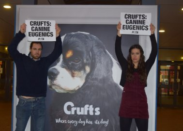 I Was the Man Who Disrupted Crufts – Here's Why I Did It