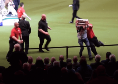 Watch: Activists Crash Crufts' 'Best in Show' to Protest Extreme Dog Breeding
