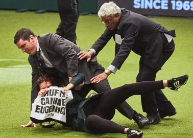 Crufts Tries to Silence Activism With DMCA Takedowns – YouTube, Twitter Side With PETA