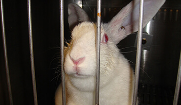 rabbit behind bars