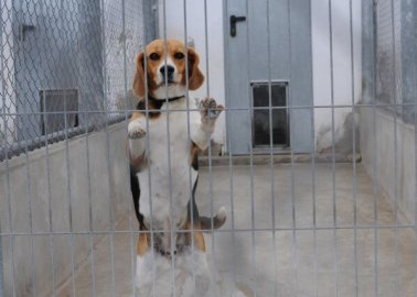 Life in an Animal-Testing Laboratory: A Scientist's Experience