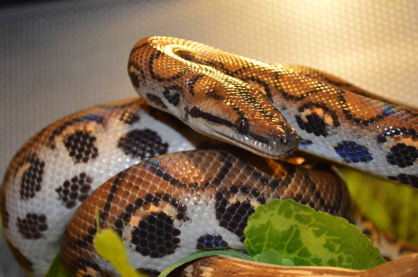 Snake Found On A London Street Reminds Us Why Reptiles Shouldn T Be Pets