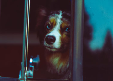 Lucy's Law: What Does It Mean for Animals?