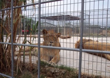 9 Reasons Not to Visit Zoos