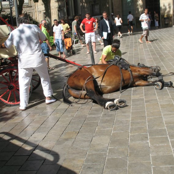 Call for a Ban on Horse-Drawn Carriages in Mallorca