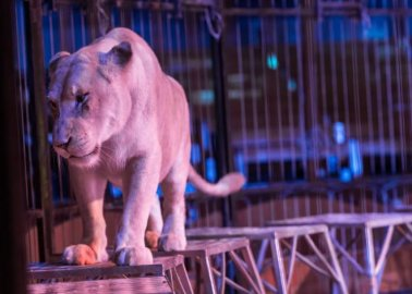 Animals in Circuses Need Your Help – Tell Welsh Government to Ban Cruel Shows