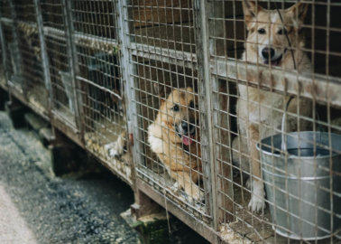 The Plight of Dogs in Romania – and How to Help Them