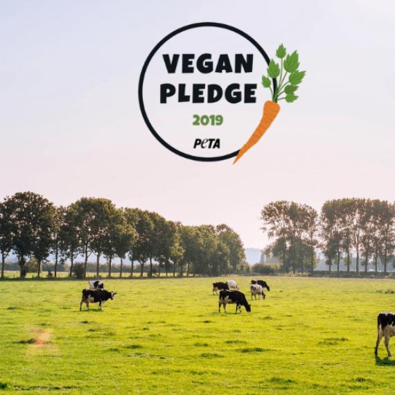Go Vegan in 2019!