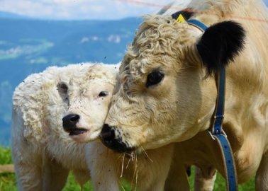 G7 Summit's Meaty Meals Prompt PETA 'Go Vegan' Billboard