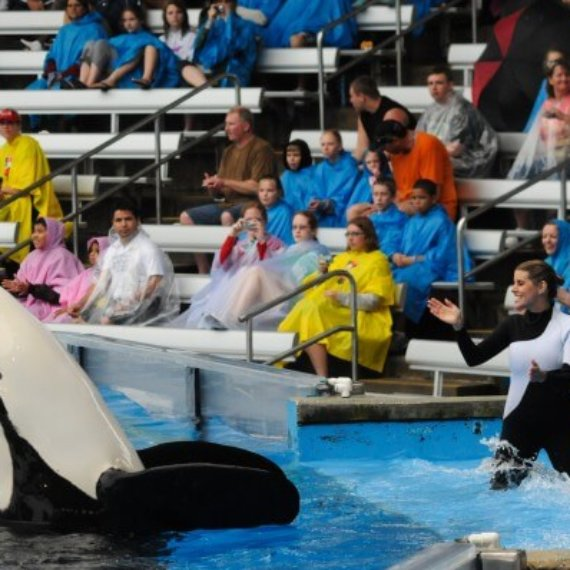 Tell TUI to Stop Supporting Orca Abuse