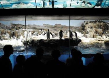 Campaign Against SeaWorld to Head to TUI Boardroom