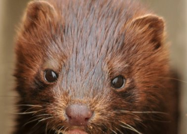 20 Years of a Fur Farm–Free UK: What's Next?
