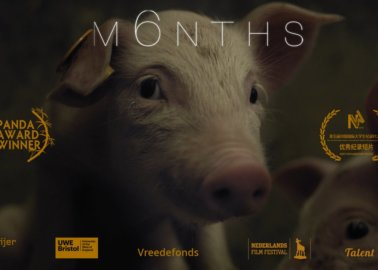 'M6NTHS' – Watch the Full Documentary, and See the World Through a Pig's Eyes