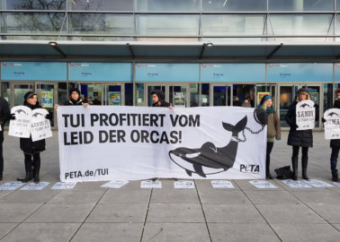PETA Supporters Install Haunting Orca 'Graveyard' Outside TUI Group's Annual Meeting