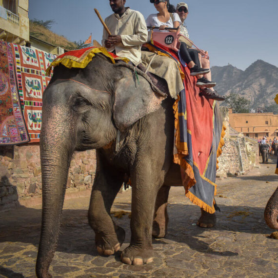 Help Animals Exploited and Abused for Tourist Rides