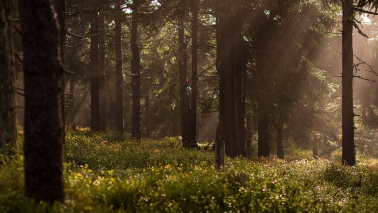 Forest setting England