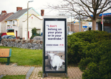 Sheep Don't Belong in Our Wardrobes: New PETA Ads in Wales