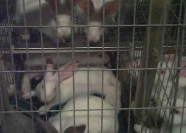 New Footage Exposes Cruelty to Rabbits in Italy
