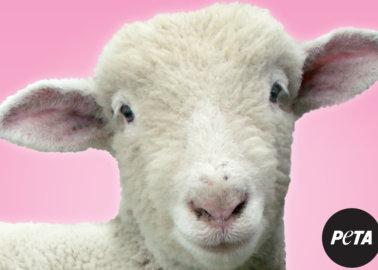 9 Ways to Urge boohoo to Ban Wool