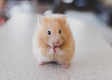 Historic Moment for Animals! EU Parliament Votes Overwhelmingly In Favour of  Plan to End Cruel Experiments