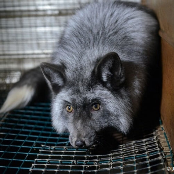 Urge Etsy to Ban Fur From Its Website!