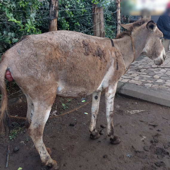Tell Kenya to Stop Slaughtering Donkeys for Traditional Chinese Medicine