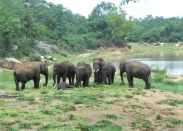 Celebrate a Happy Elephant's Five Years of Freedom!