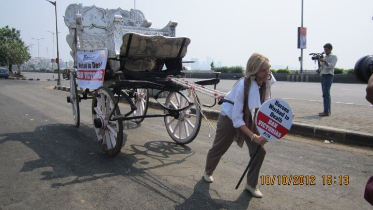 Ingrid strapped to a horse-drawn carriage and pulled it through the streets