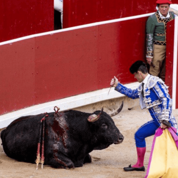 At Least 48 Bulls Are Killed in Pamplona Every July – Help Stop This!