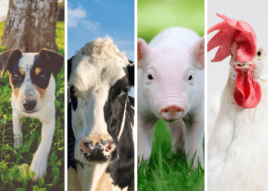 Have an Interesting Idea or Invention? PETA US Is Paying Students to Help Create a Speciesism-Free Future