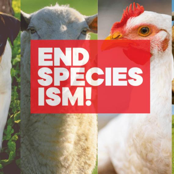 #EndSpeciesism