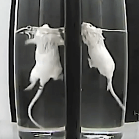Urge Pharmaceutical Giant Eli Lilly to Ban the Near-Drowning of Animals