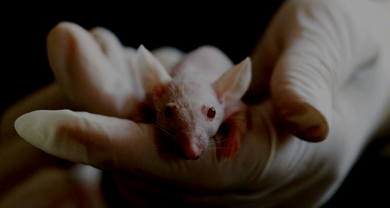 Mouse in Gloved Hand