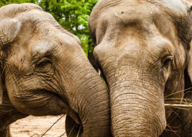 Great News for Animals: Wild-Animal Circuses Banned in Madrid