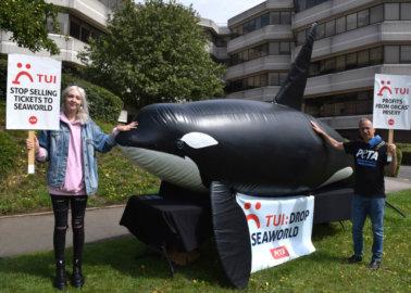 Life-Size 'Orca' Calls On TUI to Drop SeaWorld