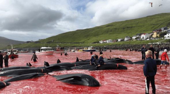 Faroe Islands: 7 Ways to Help Dolphins