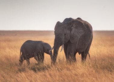 Good News! More Travel Companies Drop Elephant Rides