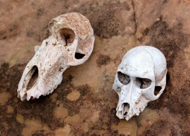 British Tourists Massacre 500 Monkeys