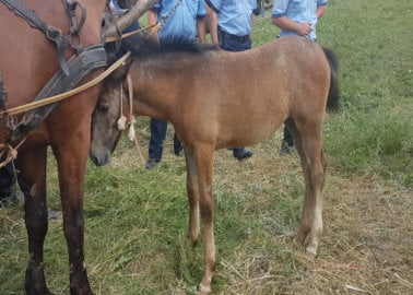 Exposed: Horses in Romania Are Beaten and Forced to Drag Boulders