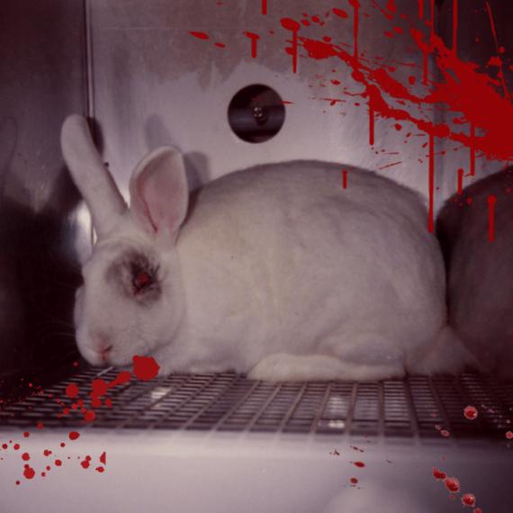 Speak Up for Rabbits Facing Horrific Suffering